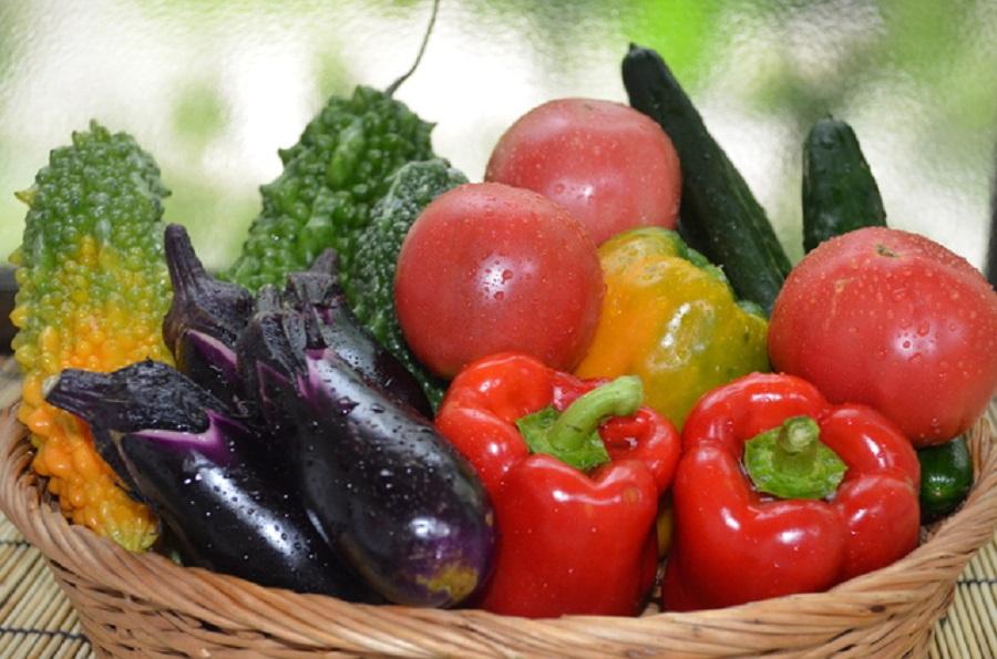 夏の食材 効能記事まとめ【随時追加】