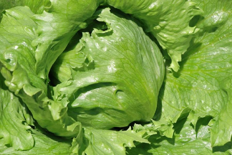 レタスの栄養と効能