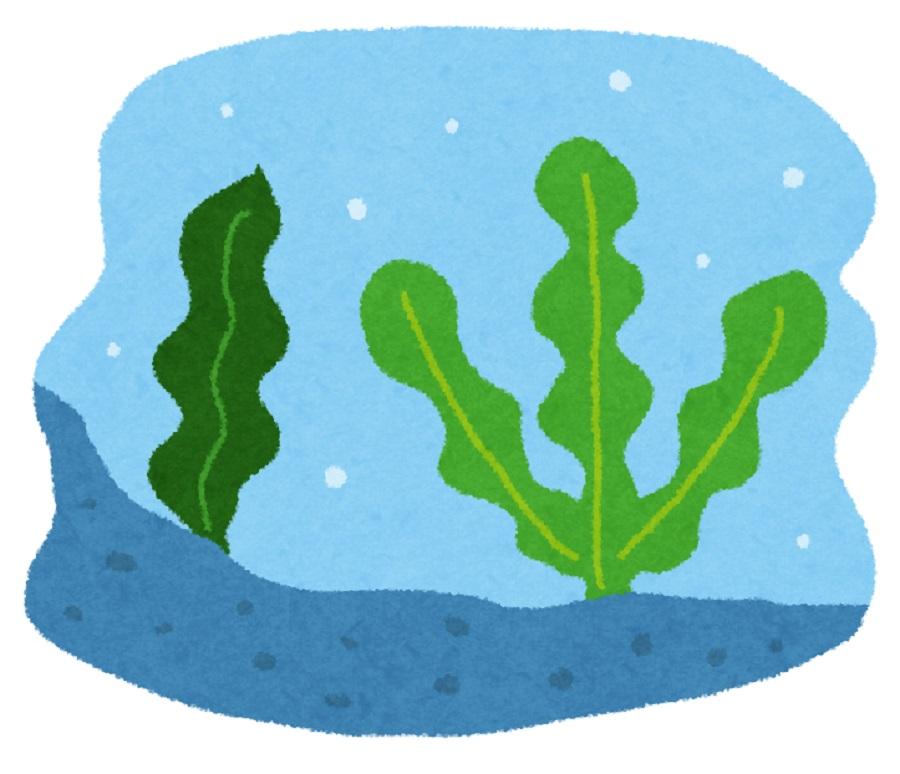 カリウムの多い海藻ランキング