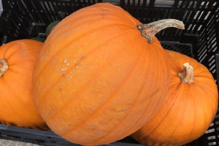 ハロウィンの巨大かぼちゃの正体や種類は?かぼちゃの栄養は?