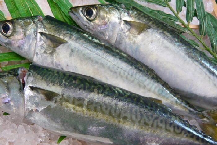 鯖(サバ)の栄養と効能は?効果を高める食べ合わせは?